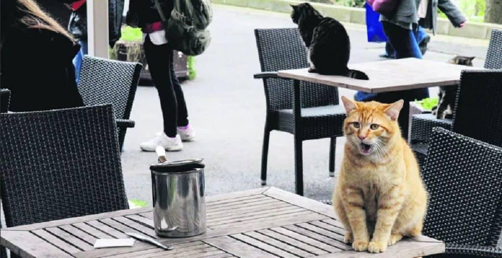 Животные на улицах в Турции