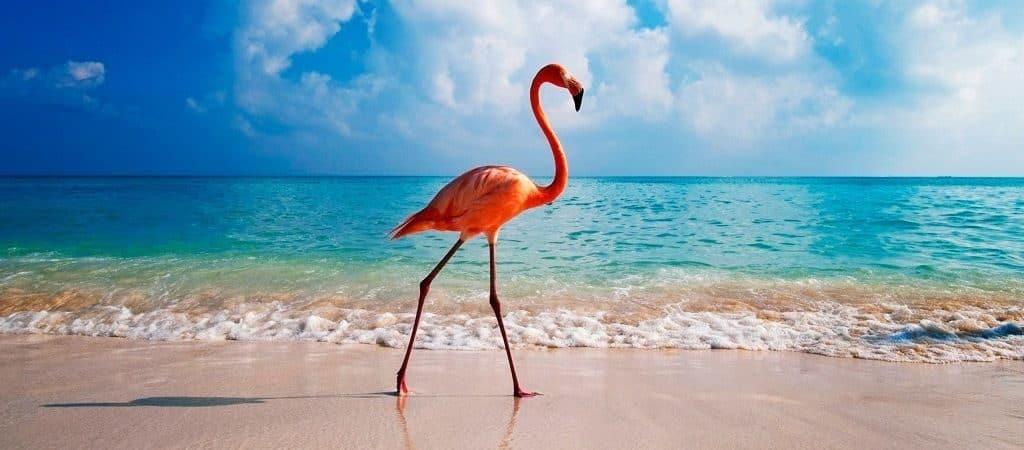 Места обитания фламинго