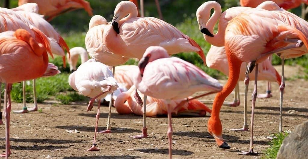 Места гнездования фламинго