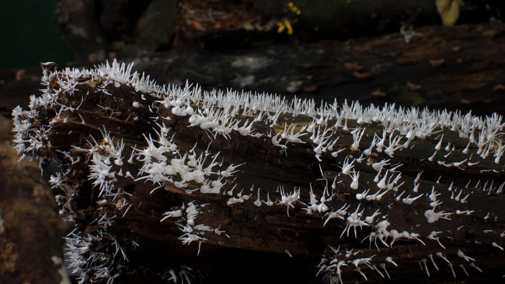 Польза и вред плесневых грибов