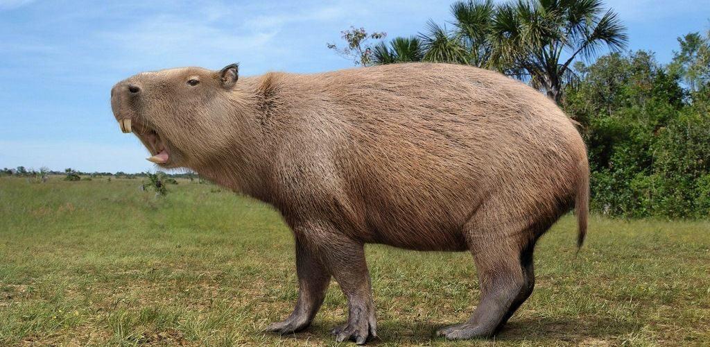 Josephoartigasia - вымершее животное