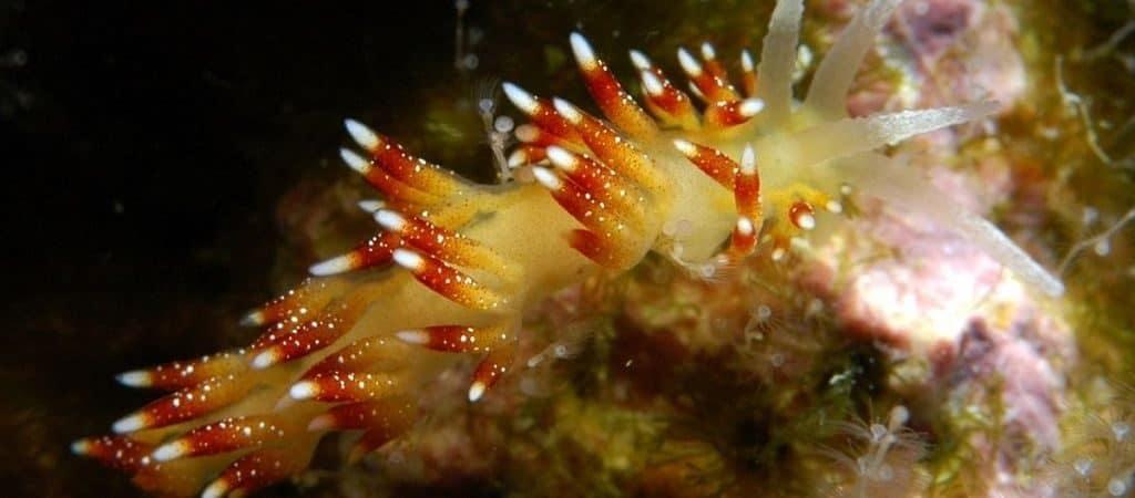 Как питается моллюск морской ангел