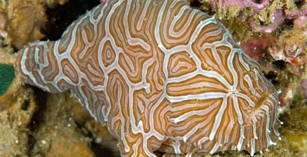 Психоделическая рыба-лягушка