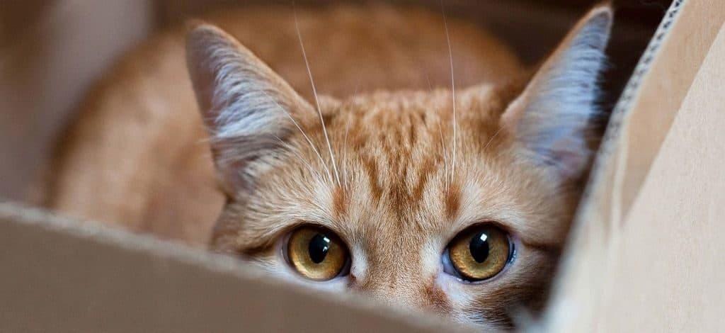 Строение глаз кошки