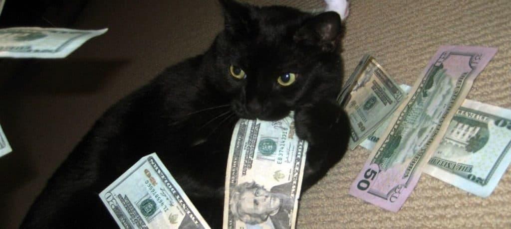 Самая богатая кошка