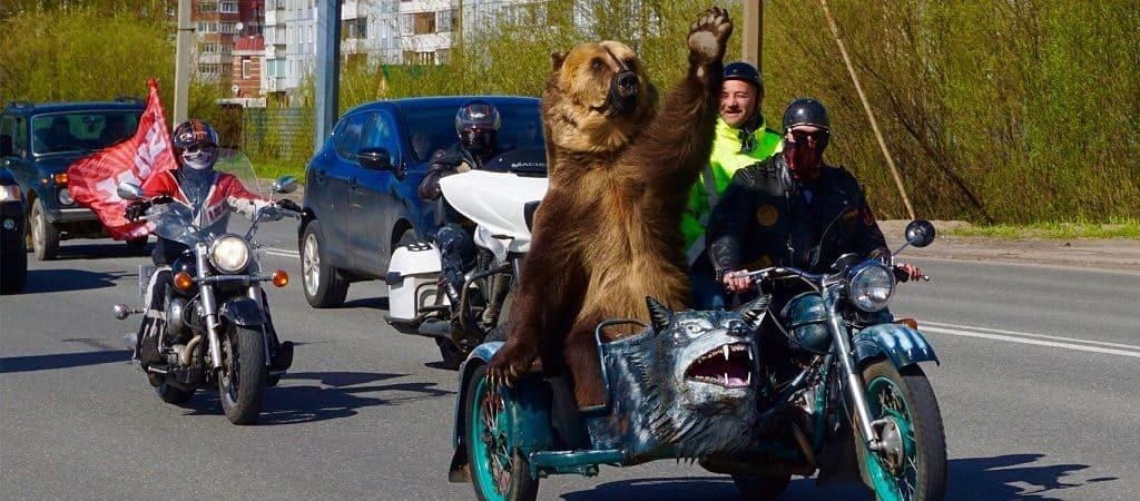 Русский медведь на дороге