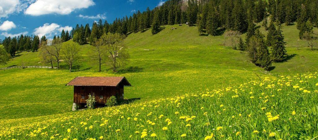 Альпийские луга Германии