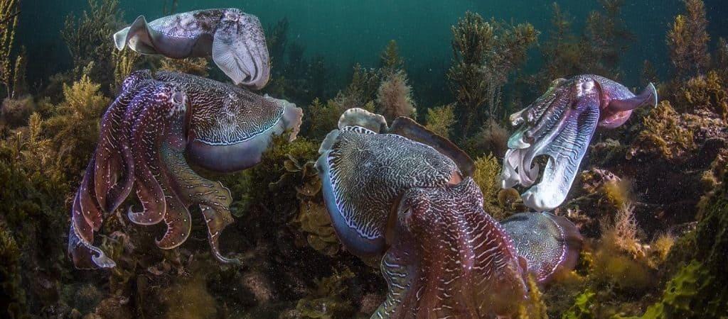 Особенности организма моллюсков