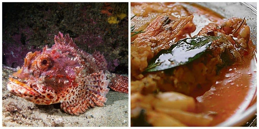 Скорпена (морской ёрш)