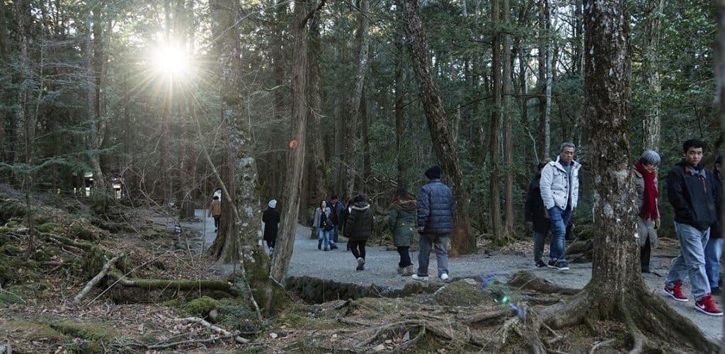 Лес самоубийц в парке Аокигахара Дзюкай