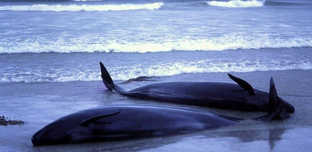 Самоубийства морских животных
