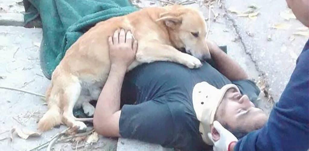 Верность домашних животных