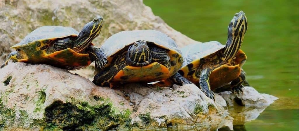 Интересное о черепахах