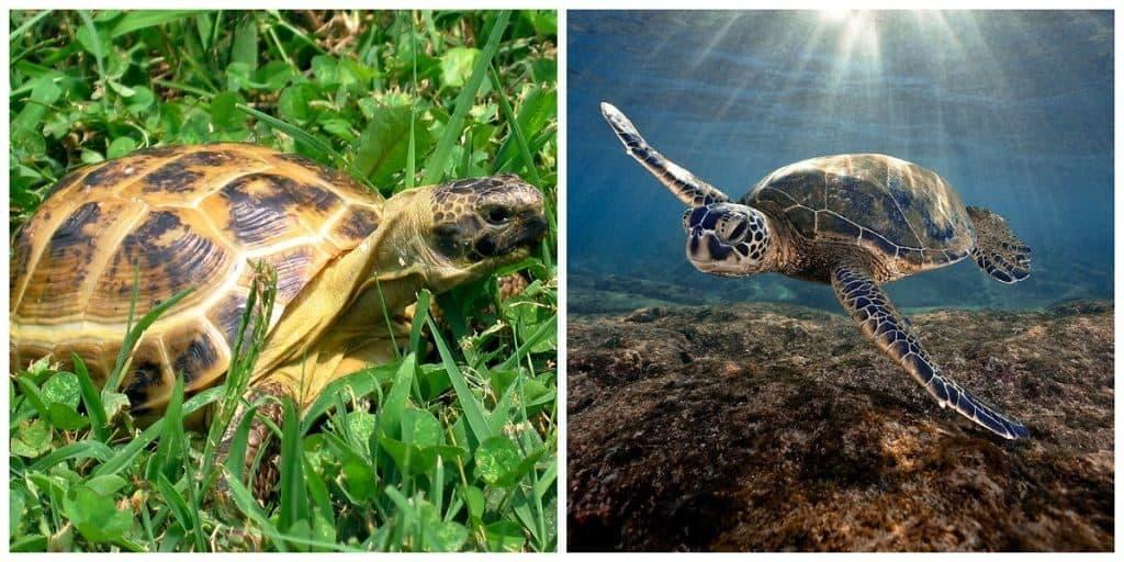 Черепахи на суше и в воде
