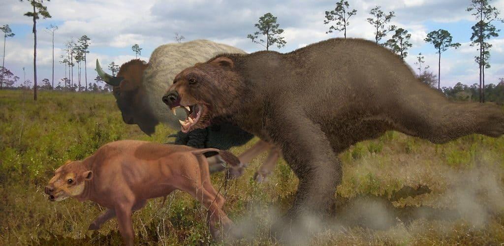 Предки медведя