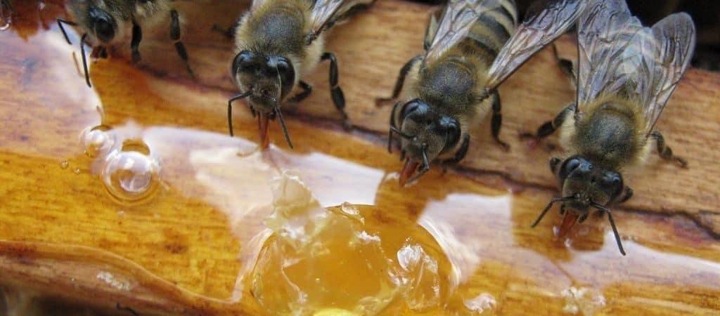 Как живут и работают пчелы