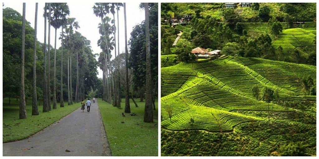 Королевский ботанический сад Цейлона, мемориальная аллея
