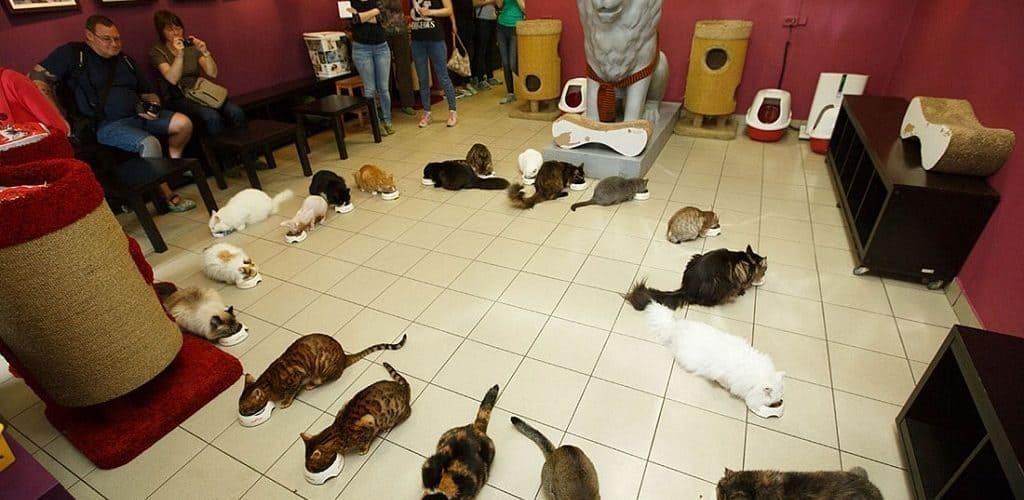 Кошки в Эрмитаже