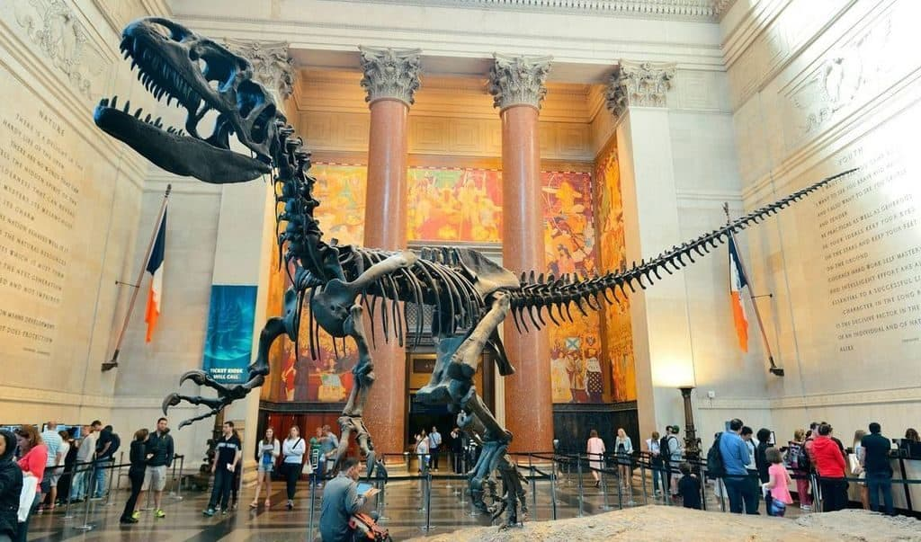 Американский музей естественной истории