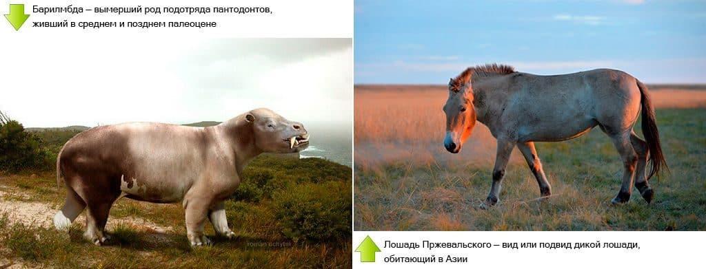 Барилямбда и современная лошадь