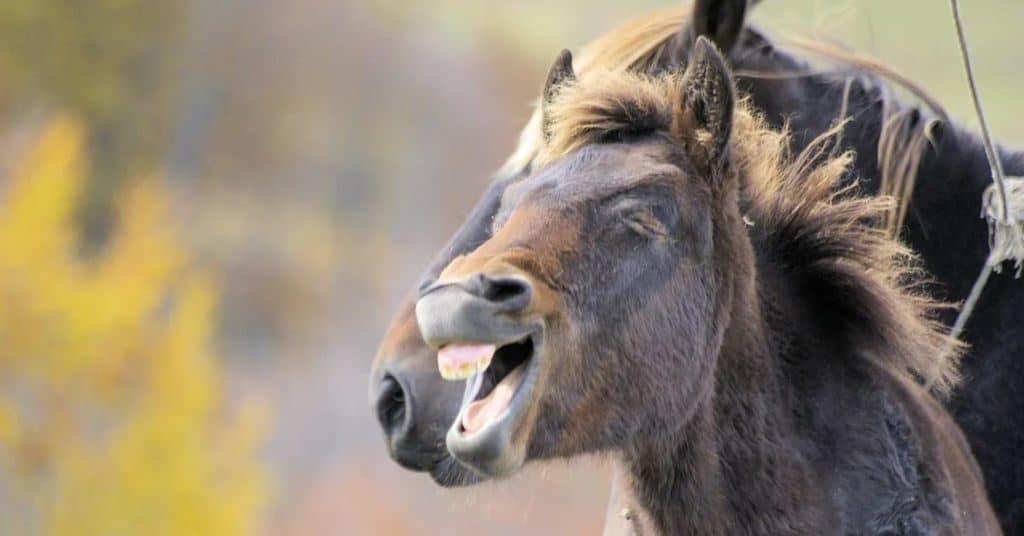 Лошади умеют смеяться