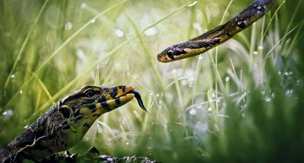 Ящерица и змея