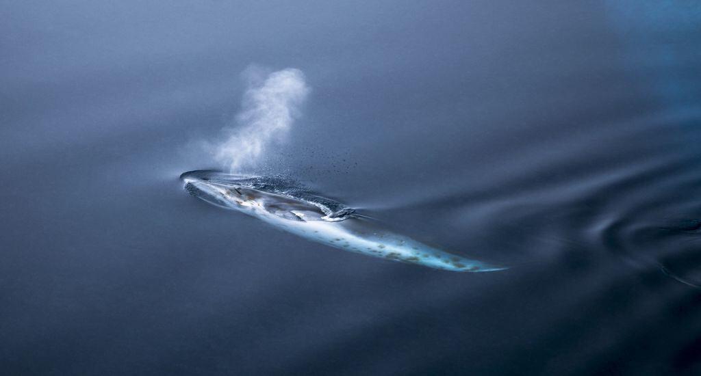 Сон голубого кита