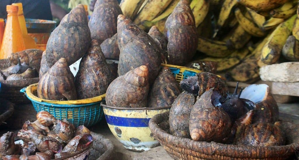 Улитки в Нигерии