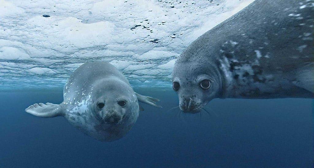 Особенности флоры и фауны Северного Ледовитого океана