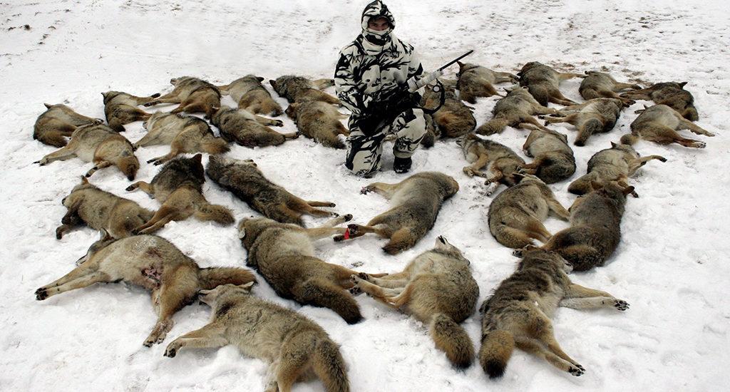 Истребление волков человеком