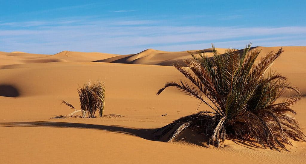 Растения Сахары