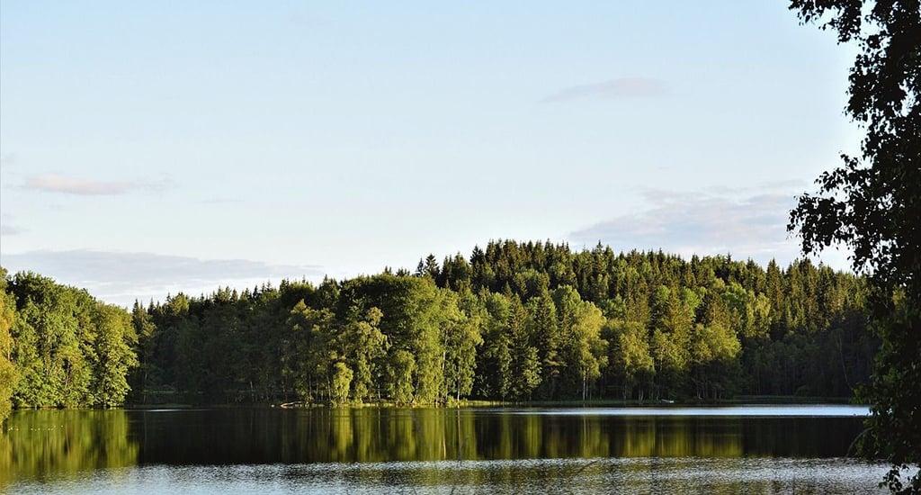 Леса Швеции