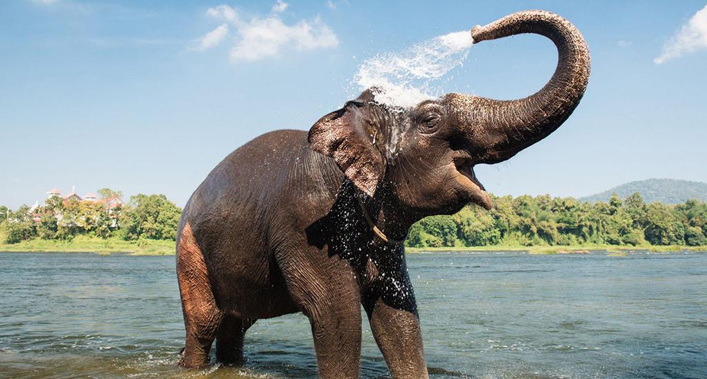 Слоны-интеллектуалы