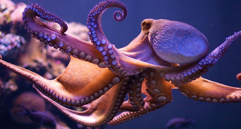 Щупальца осьминогов