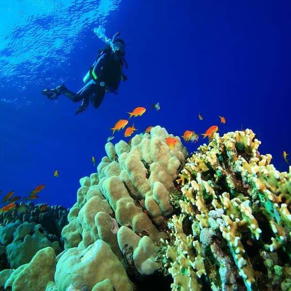 Корралы, морской туризм ОАЭ