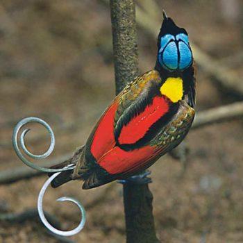 Райская птица на ветке