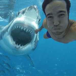 Опасное селфи с акулой