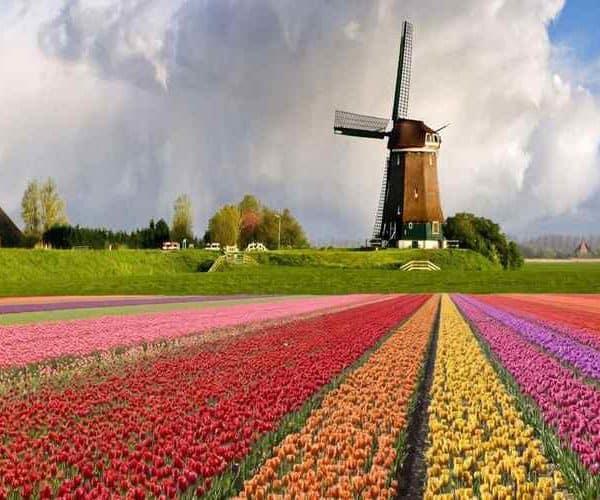 Амстердам тюльпаны и мельницы
