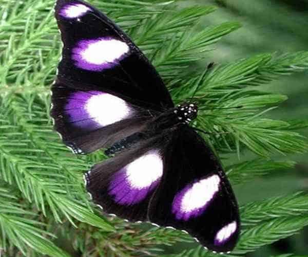 Красивая синяя бабочка