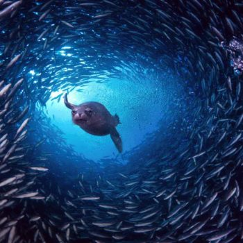Галапагосские острова, подводный мир