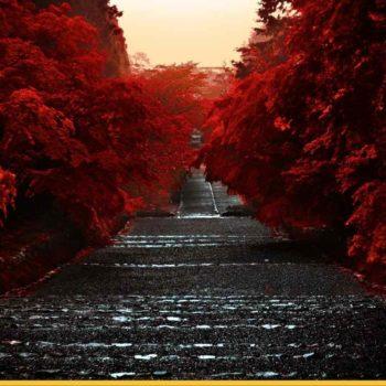 Японский красный парк