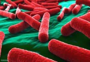 красивые бактерии
