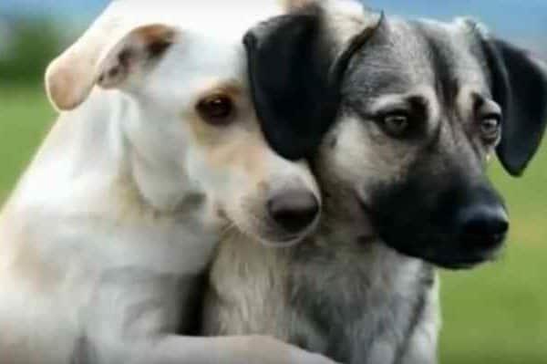 Просто собаки