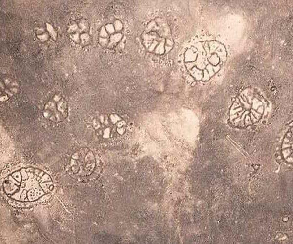 Каменные круги в Сирии