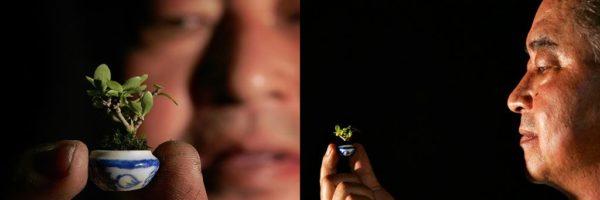Самый миниатюрный в мире бонсай