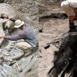 Раскопка скелета в пустыне Гоби