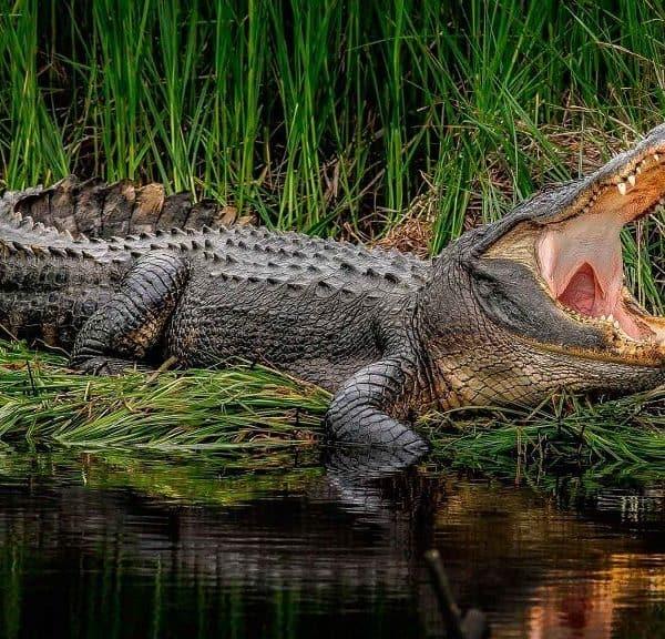 Интересные факты о крокодилах