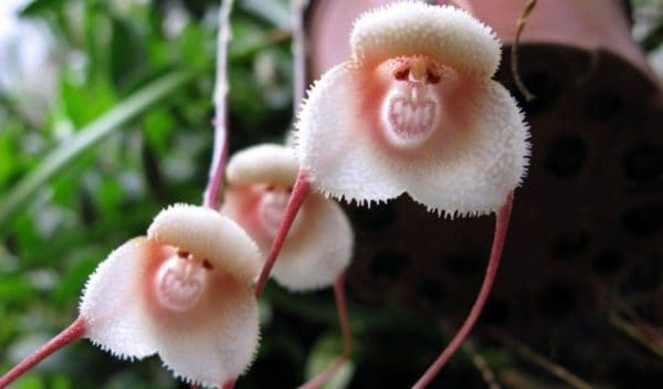 Самые страшные цветы