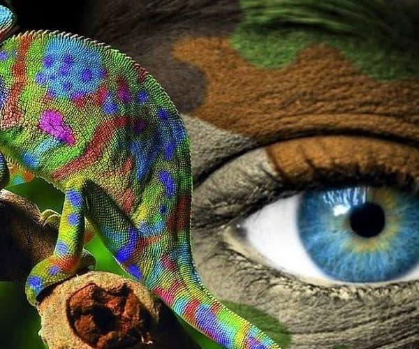 Мастера маскировки среди животных