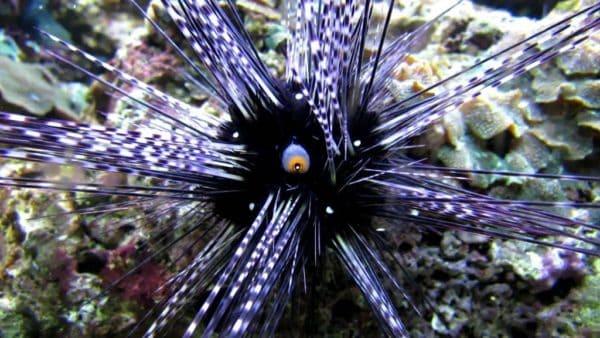 Интересные факты о морских ежах